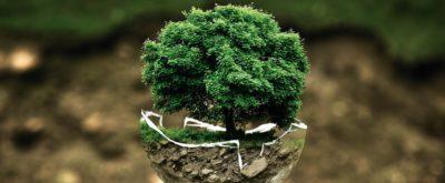 Baum in Kugel